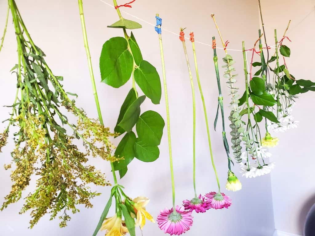 flowers drying hanging on a string