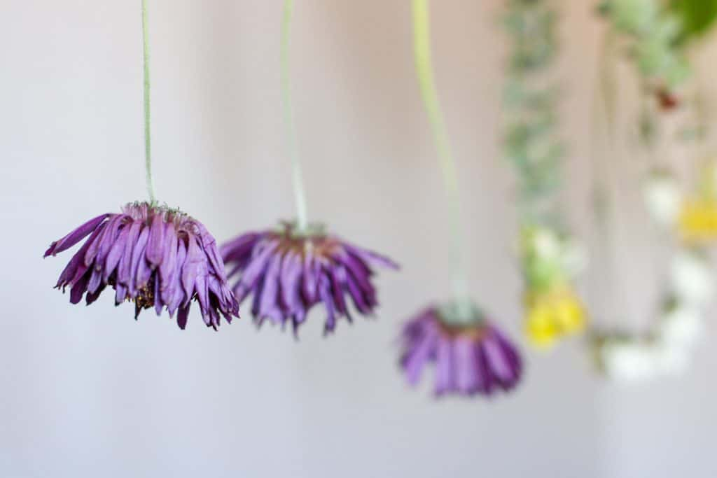 close up of a dried flower hanging from a string